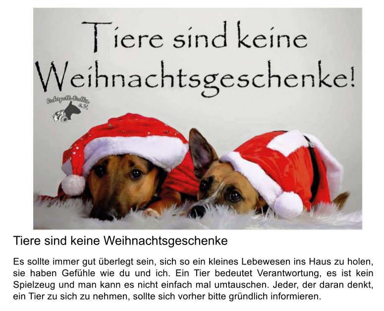 Tiere sind keine Weihnachtsgeschenke | Tierheim Wurzen