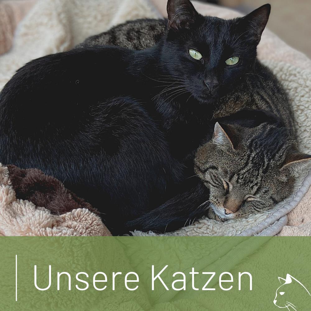 Link zu den Katzen im Tierheim Wurzen, die ein Zuhause suchen.
