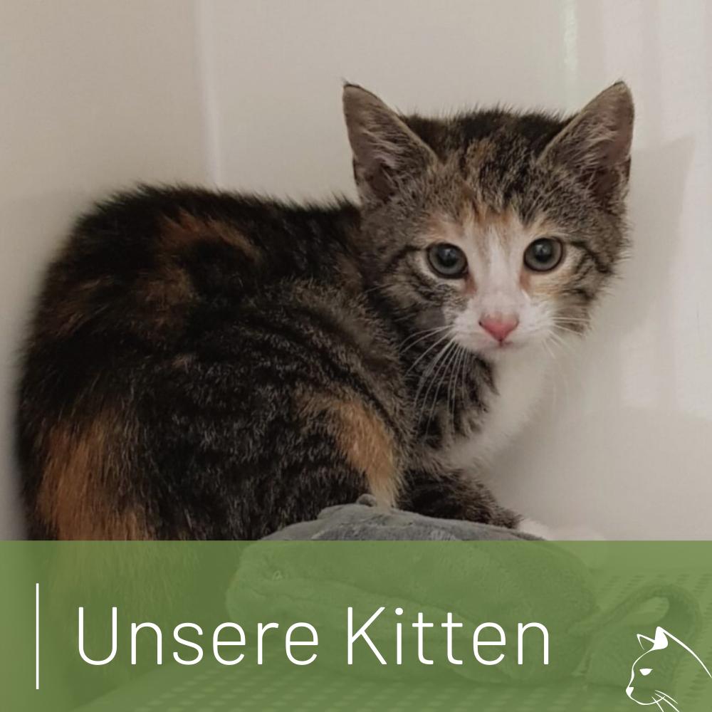 Titelbild für Unsere Kitten