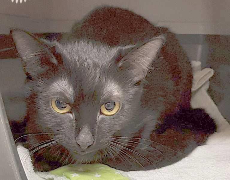 Ein Bild der Katze Elea