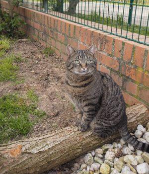 Eine Katze sitzt auf einem Baumstamm im Außengehege des Tierheims.