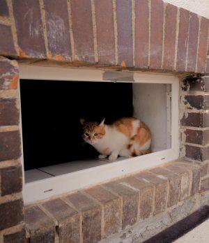 Eine Katze schaut aus einem Kellerfenster