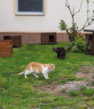 Eine Katze läuft durch das Außengehege des Tierheims.
