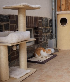 Eine Katze sitzt auf einer Fußmatte vor einem Kellerfenster.