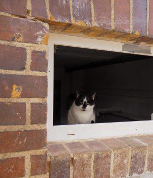 Eine Katze guckt aus einem Fenster raus.