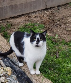 Eine Katze steht auf einem Baumstamm im Außengehege des Tierheims.