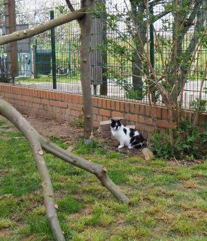 Eine Katze sitzt im Außengehege des Tierheims.