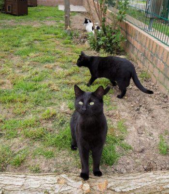 Bild von Ivan im Außengehege des Tierheims in Wurzen