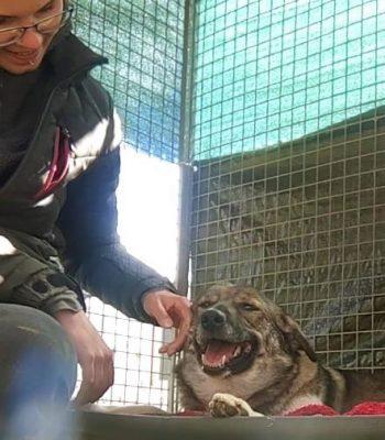 Eine Frau streichelt die Hündin Suma am Kopf.